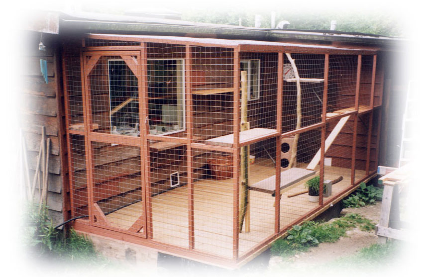Cat Boarding With Outdoor Play Area 99