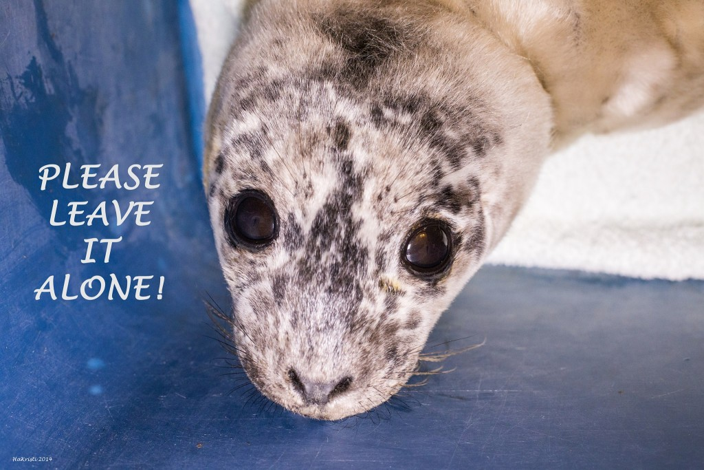 leave-seal-pups-alone