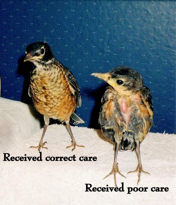 proper-care-for-birds